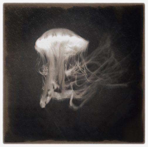 _-meduse