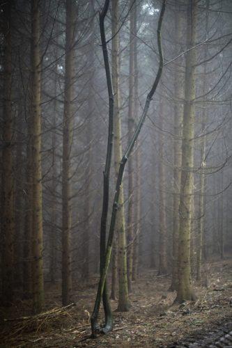 portrait-arbre-03