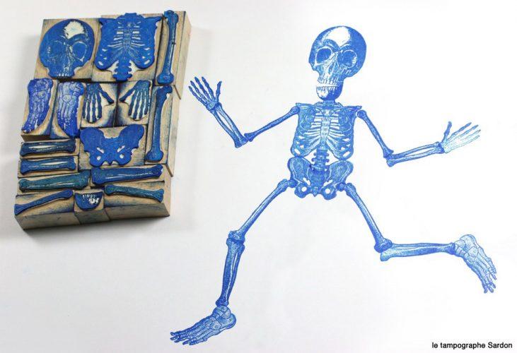 esquelette-grand-format