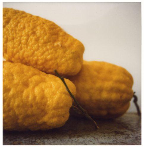 Citrons_VI