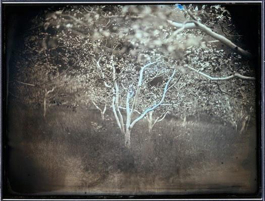 arbre-fruitiers