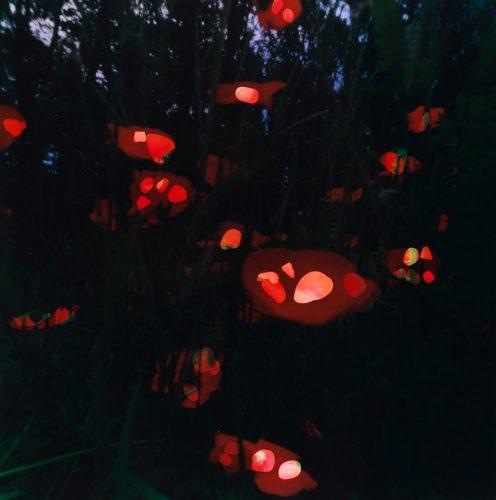 17-PoppiesStonesPloegsteertBelgium2014_74x74cm