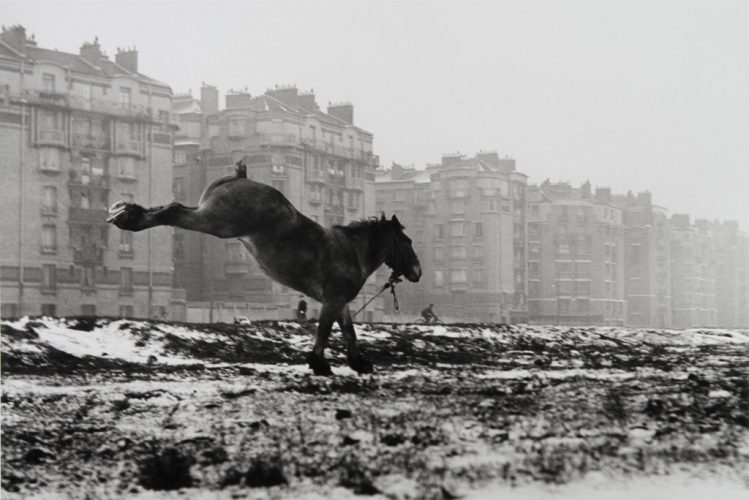 Cheval-ruant,-porte-de-Vanves,-1951-∏-Sabine-Weiss_Collections-Musee-de-l'Elysee