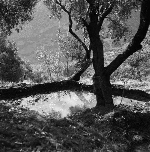 Mare,-Delphes,-1954