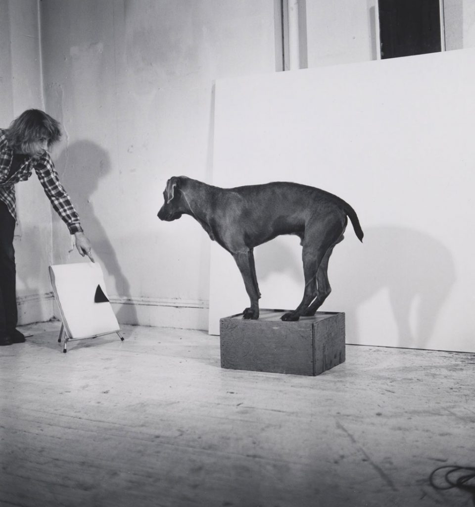 New York : Ouverture de l'exposition William Wegman