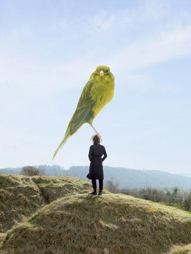 Jaap_Scheeren_bird