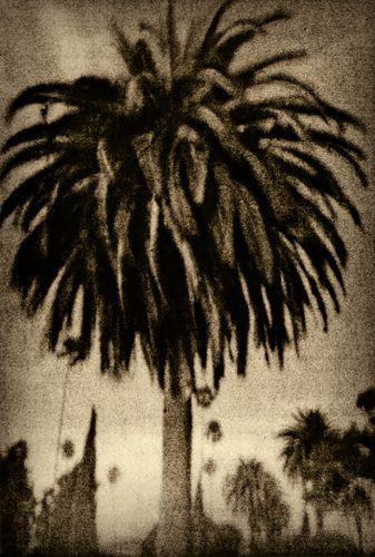 Zuili-Palm-Tree-Large