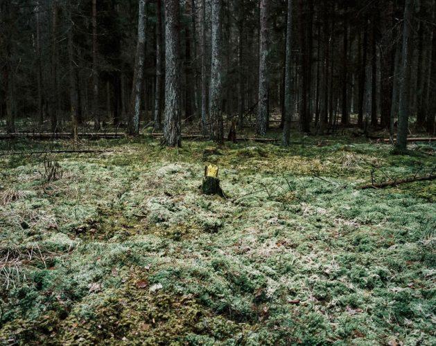 ©MantovaniAndrea_BialowiezaForest-(10-sur-32)