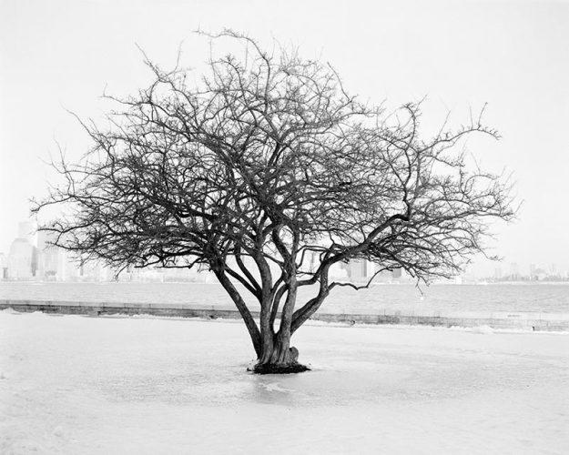 thomas-bouquin-gallery_ccff_03