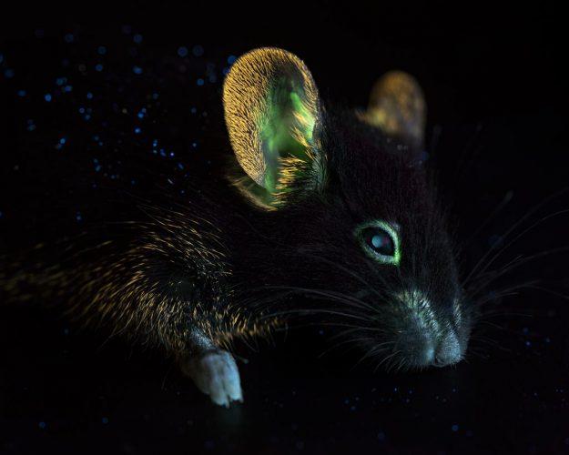 La-bioluminescence-chez-la-méduse-