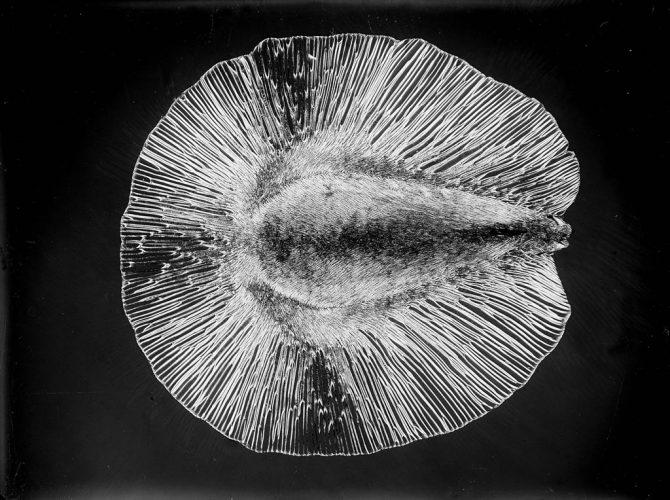 Laure-Albin-Guillot-Micrographie-(graine)