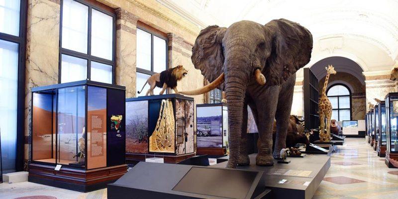AfricaMuseuminside