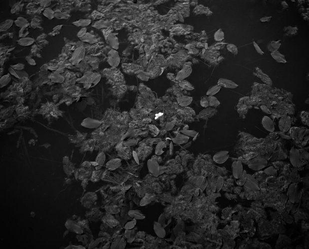 a-terra-incognita-02