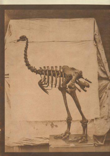 bird-skeleton-600x849