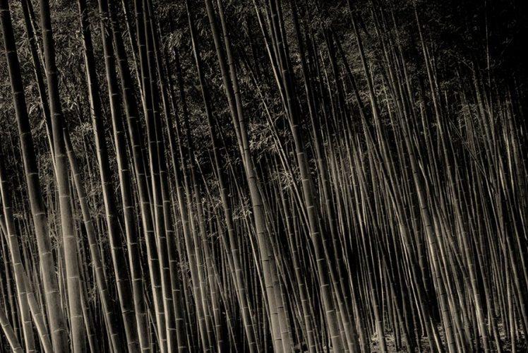 _c_Paul_Cupido_bamboo-kyoto-flat_900px
