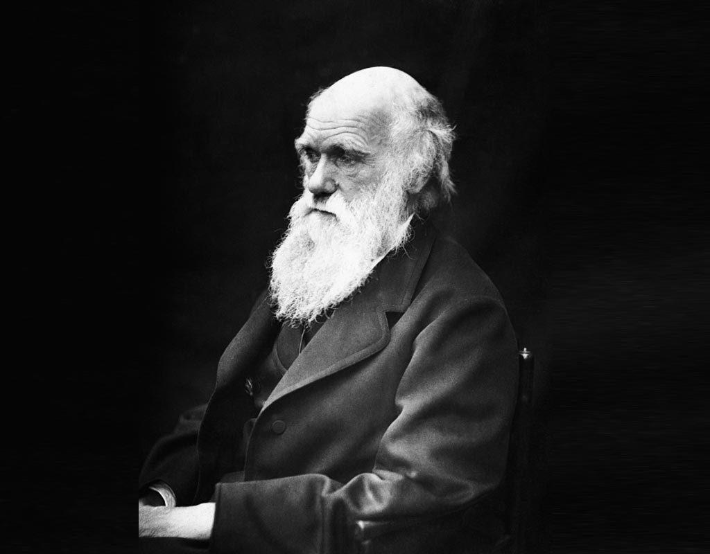 Carte blanche à Anne Morin : Sur les épaules de Darwin