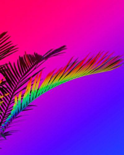 OVNI-Galerie-Bubenberg_Signe_Pierce_034_Rainbow_Palm_76x61cm2015