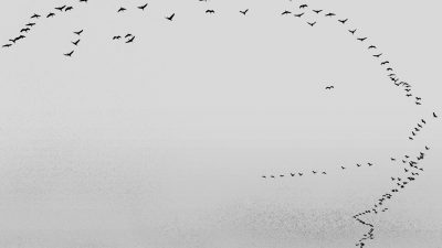Carte blanche à Bernard Descamps : Natura