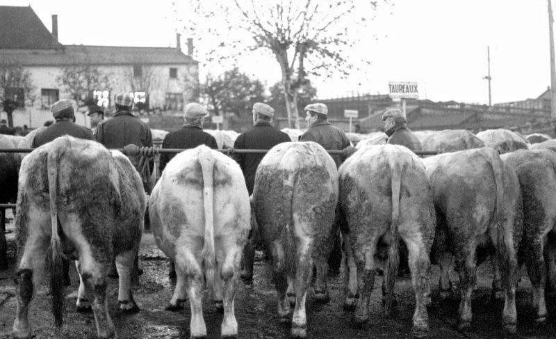 1979-FOIRE-AUX-BOVINS-ST-CHRISTOPHE---EN--BRIONNAIS-©-jacques-Revon