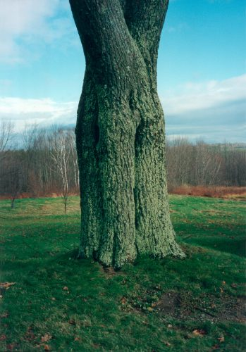 WIELS-Tillmans-Shaker-Tree_A4_temp