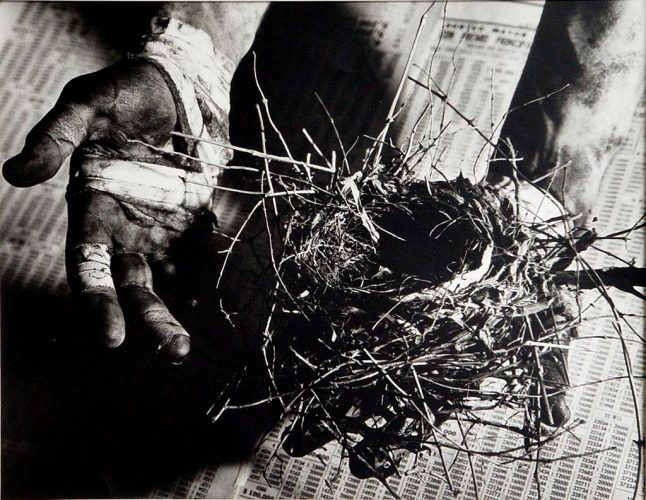 Hands+Nest