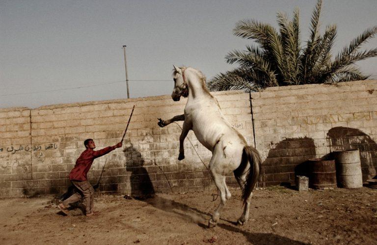 Moises-Saman_Taming-a-Horse_2004