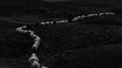 Carte blanche à Stéphane Brasca : Islande, île noire de Marc Pollini
