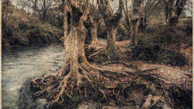 Promenades Photographiques, Vendôme 2020 : Entretien avec Cyrus Cornut